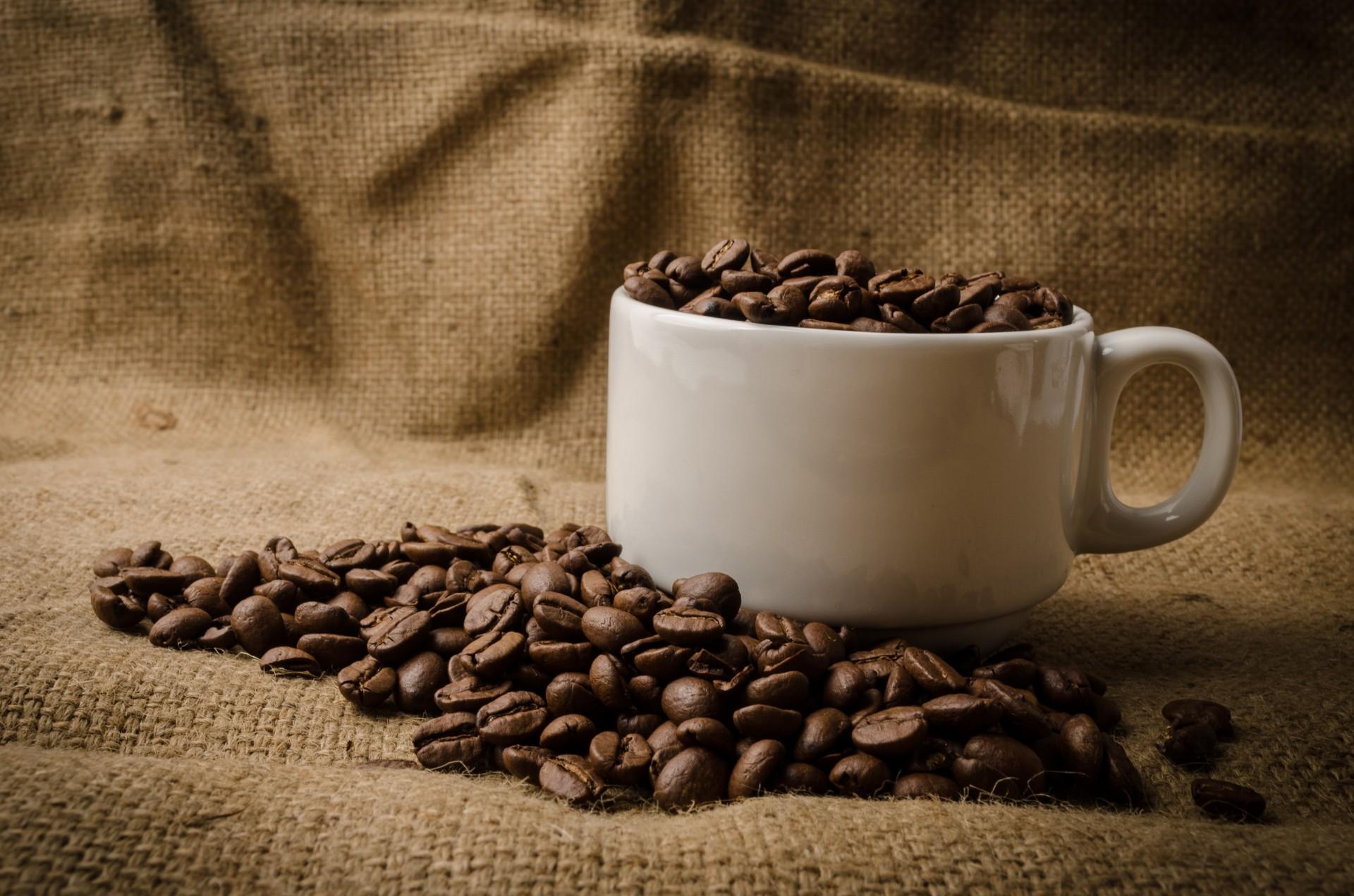 kawa z cykorii i jej właściwości