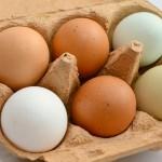 Dlaczego warto jeść jaja?